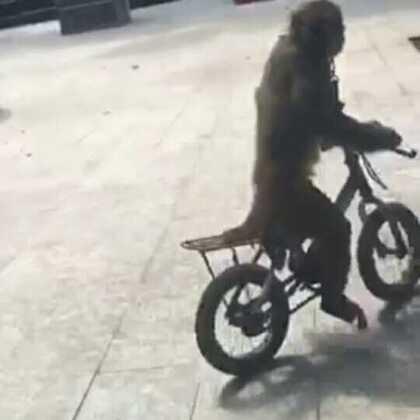 猴哥喜欢看美女😊