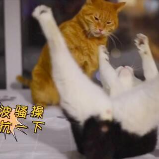 今天来给你们慢动作全方位的展示【猫是怎么打架的】(✪ω✪)宝批龙贱嗖嗖的狂撩木木,一场大战一触即发#十爷家的傻鹅子们#