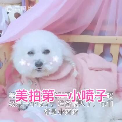 #宠物##1秒叫醒你家宠物##萌宠暖心15秒#喜欢这样的小喷子沫沫吗?如果美拍所有喷子都像沫沫一样可爱就好了对吗?希望的仙女们点赞呢😍😘😘