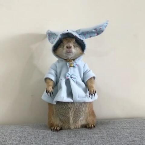 【俊男美女集中营美拍】土拨鼠,穿花衣。@小冰 👉More P...