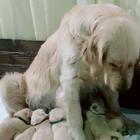蛋:那天我是被强迫的#宠物#