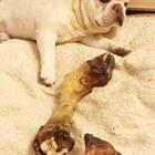 昨晚上来福守着蹄子睡的,蹄子睡垫子,自己睡地下😂😂😂#宠物##汪星人##我要上热门@美拍小助手#@宠物频道官方账号