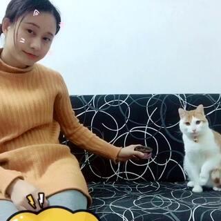 #宠物#萌萌哒猫星人《橘子》