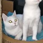 #钛合金眼##神同步##猫咪#