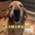 我要不要告诉你们,其实胖纸是短腿😂😂😂#精选##宠物##金毛#@美拍小助手 @宠物频道官方账号