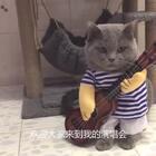 #宠物界吃货#唱着唱着,被吃的吸引走了。。😂😂