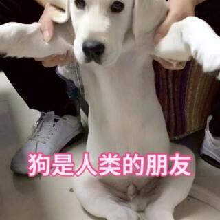双击❤️❤️#宠物##精选##宝宝#