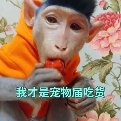 周六买的草莓 悟空的日常水果 #宠物界吃货##宠物##日志# 更新了驱虫的小常识 家长们可以来看看 @喵喵儿的店