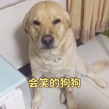 #宠物#我俩刚回家妈妈说你看狗狗脸怎么这样啊😂😂