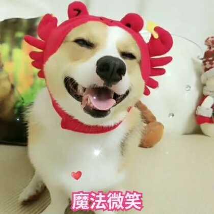 寒冷的冬天,来一个魔法微笑,祝大家天天开心❤😘#宠物##肉圆小短腿##我要上热门@美拍小助手#