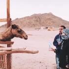 撒哈拉沙漠住着努比亚人饲养的骆驼