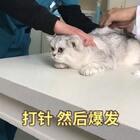 #宠物#一直吐 带到医院里 我感觉医生是崩溃的😂