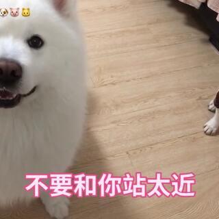 黑斗斗说:不要和哥哥站太近,显得我更像煤炭😂#宠物##欧北北vs花圆满#