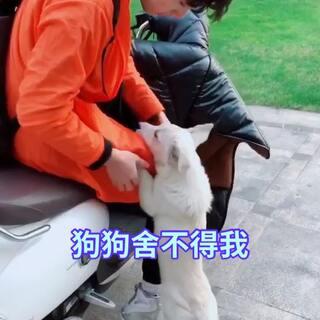 #宠物##狗狗##感动#拍完视频后跟我熟了,舍不得我了,好感动😭