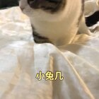 跳过来那两下,萌死我了!#宠物##奶家军#【我家店鋪:https://shop61141321.taobao.com】
