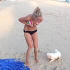 这12只狗最喜欢哪个?😂#搞笑##宠物#