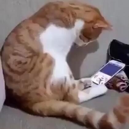 这只猫的女主人去了天国...当猫在手机再次看到她的视频后...❤️
