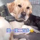 #宠物#😂😂#艾伦爸爸自制天然狗狗零食#淘宝:5130736 微信:threedogs2016