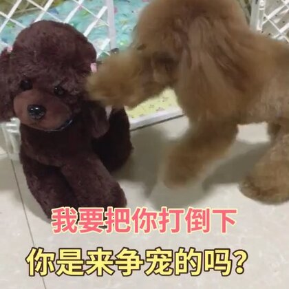 #汪星人##宠物#莎拉:🐶你是来争宠的吗?我要把你打倒下,让你知道我的厉害🤥http://item.taobao.com/item.htm?id=557588985039 莎拉麻麻手工宠物零食!