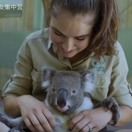 澳大利亚悉尼一动物园的这只考拉叫Harry, 它最喜欢饲养员抓它肚子,可爱乖巧的样子看了让人心情瞬间放松下来。The world's most chilled Koala 🐨🐨 @小冰 👉更多http://www.meipai.com/media/631656006?uid=1067758940 #俊男美女乐开怀##考拉##宠物#