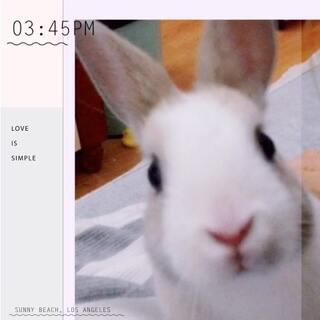 关于一只好奇宝宝:奶茶妹☕️#宠物##道奇侏儒兔#