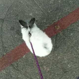 #溜兔日常##宠物##精选#