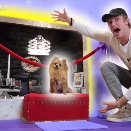 我的双层床做好啦,还给Kong做了全世界最棒的狗窝,它一定超爱我!#热门##搞笑#
