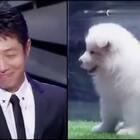 撒贝宁:脸上笑嘻嘻,心里mmp,😂😂😂#搞笑##宠物#