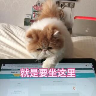 #喵星人##宝宝##萌宠##加菲猫#专属座垫,精准定位
