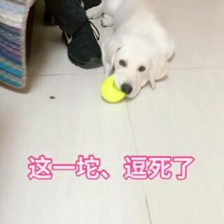 哈哈哈哈、双击关注我吧#精选##宠物##宝宝#