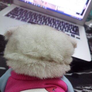 已经胖了#宠物##宝宝##猫咪#