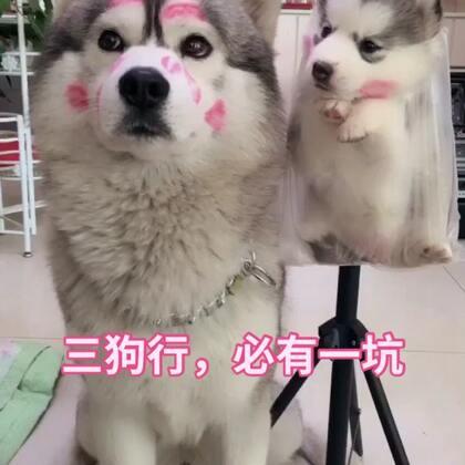 为啥狗与狗之间还有歧视🌝