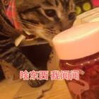 刚拔草了最近的网红玫瑰花茶🙂结果一到手 🙂弟弟就给我把盒子啃得稀烂稀烂🙂#宠物##俩喵欢乐多##宠物界吃货#