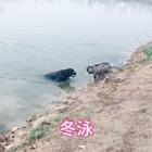 #宠物#郊游变成游泳了,赶紧回家洗澡,一会U乐国际娱乐吧😥