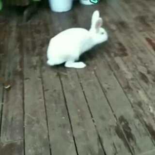 #宠物##精选##我家的萌萌兔宝贝#