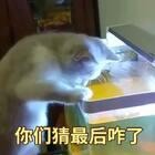 #宠物##我要上热门#@美拍小助手 #搞笑#