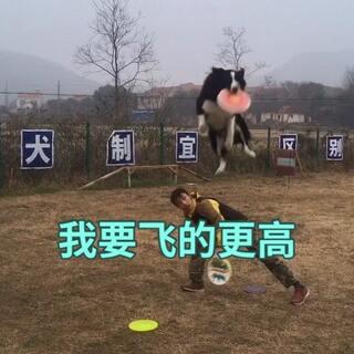 #边境牧羊犬##武汉训犬训狗##宠物#