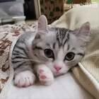 每到周一的我,不想起床,不想动。。。😂#宠物#