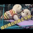 #宠物#婚前婚后真实写照!笑死我了两只狗狗实在太可爱了??@美拍小助手