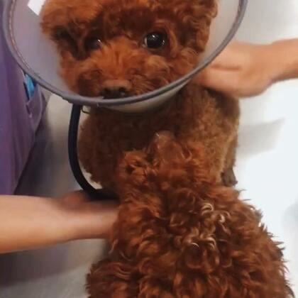 #精选##宠物#洗个澡吓成这样