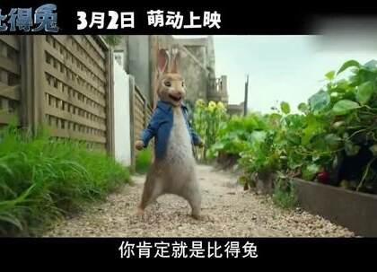 #比得兔# 内地定档,能打能斗,智商爆表,这支兔子战力惊人!😱