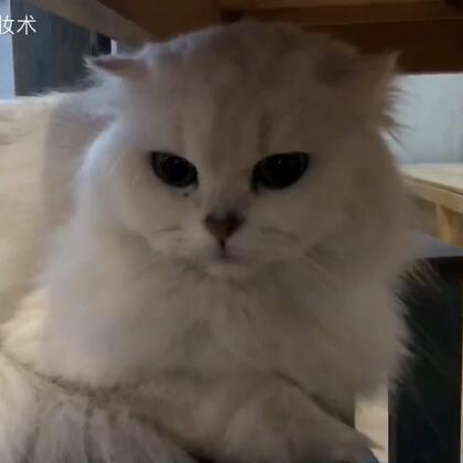 #宠物#就喜欢在这种,好多可爱的猫猫的咖啡厅