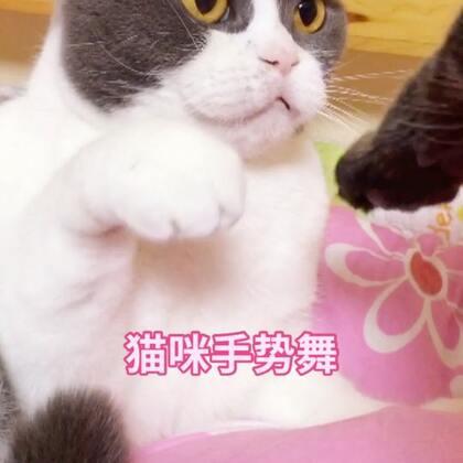 小女森的手🙄是你想拉就能拉的吗😡#宠物##俩喵欢乐多##宠物手势舞#