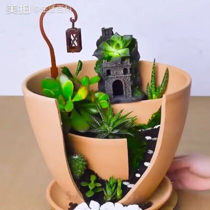 盆栽还能这么玩!#生活百科##手工#