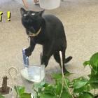 timo: 今天做点什么坏事好呢?#宠物##timo#