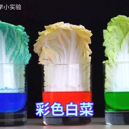 #手工#见过彩色白菜吗?原来白菜一个晚上能喝那么多水#科学小实验##白菜#