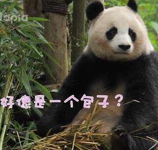 #萌团子日常#不要笑话北川,你难道没有失忆的时候吗?啊?