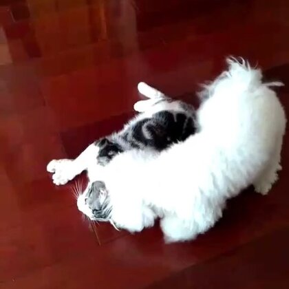 新式狗推磨哈哈哈哈 在地上画心形的圈
