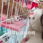去医院复诊的时候遇到一直猫咪好喜欢维尼,一直想摸摸维尼,好有爱呀,这大概就是一见钟情了吧#猫猫狗狗的打情骂俏#