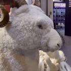 【原创·美拍首发】在展会现场发现了一只模型羊,但是这绝不是一只简单的羊,有亮点哦!!#我要上热门##搞笑##精选# @美拍小助手